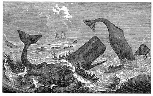 Moby_dick_gravure