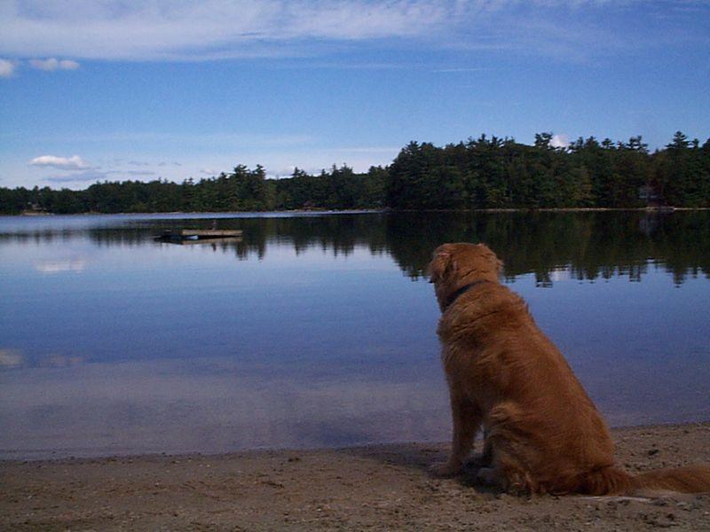 Byzy at the Lake