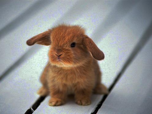 Rabbit34_1024x768