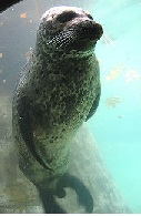 Tlc seal