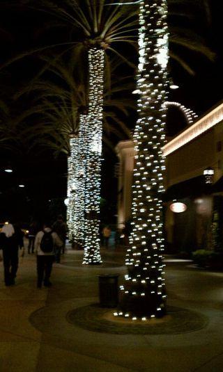 Palmtreesandtwinklelights