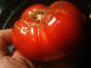 50 Dollar Tomato