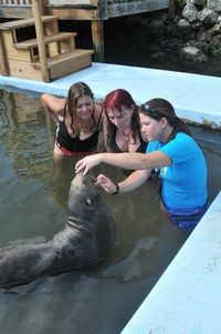 Dolphin dream date--Kathy, Heather, and karen, the blind seal